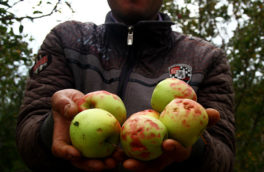 خسارت ۲۰۰ میلیارد تومانی به اراضی باغی و زراعی ارومیه