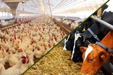 کارخانهجات خوراک دام و طیور آذربایجان غربی با ظرفیت زیر ۳۰ درصد فعالیت دارند