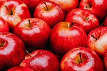باغداران سیب در خطر ورشکستگی / ۶۵۰ هزار تن سیب آذربایجان غربی در آستانه فاسد شدن